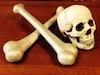 Realistic Skull with Plastic Bones